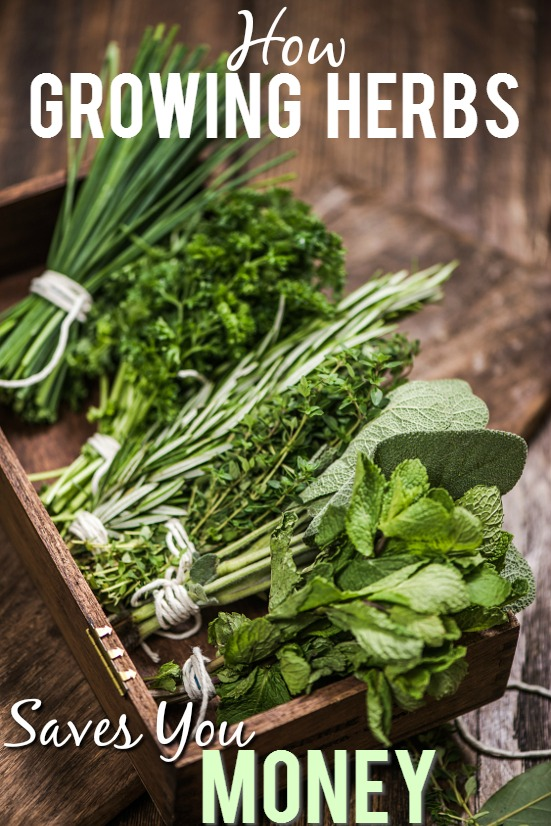 10 Ways Growing Your Own Herbs Saves You Money -Herbs are incredibly useful in cooking, crafting, beauty products, and more, but they can be costly. Check out these 10 ways growing your own herbs saves you money and start saving now! Frugal Living | Save Money