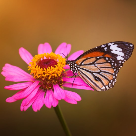 6 Ways to Attract More Butterflies to Your Yard this Summer