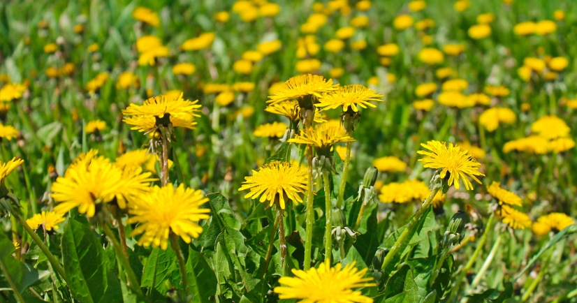 7 Natural Ways to Kill Weeds in your Garden -Weeds can be a huge pain, but not if you're armed with simple tips to get rid of them. Use these 7 simple natural ways to kill weeds in your garden to keep it looking nice all Summer long. Gardening tips