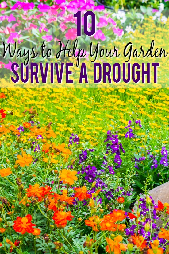 10 Ways To Help Your Garden Survive A Drought   You Donu0027t Have To