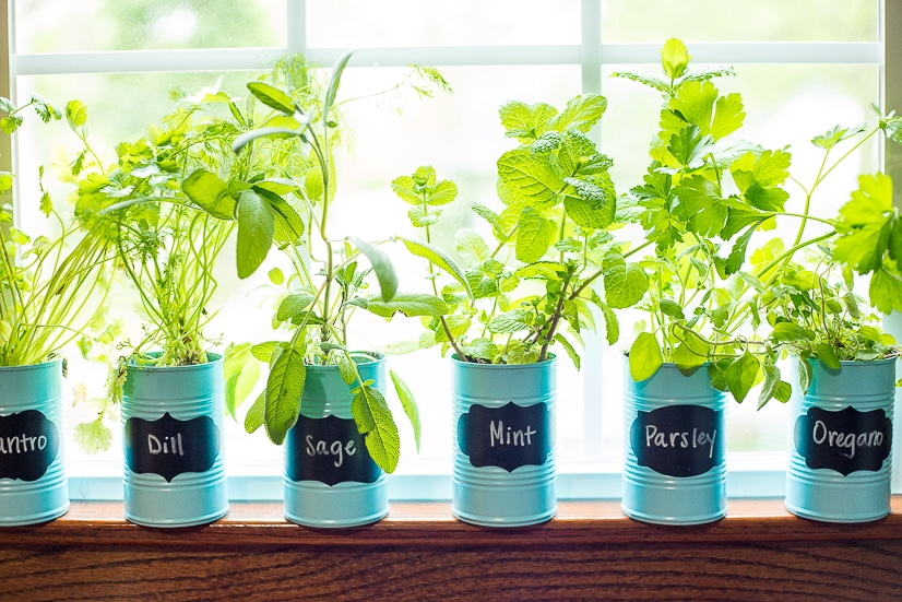 How To Make An Indoor Window Sill Herb Garden The Gracious Wife
