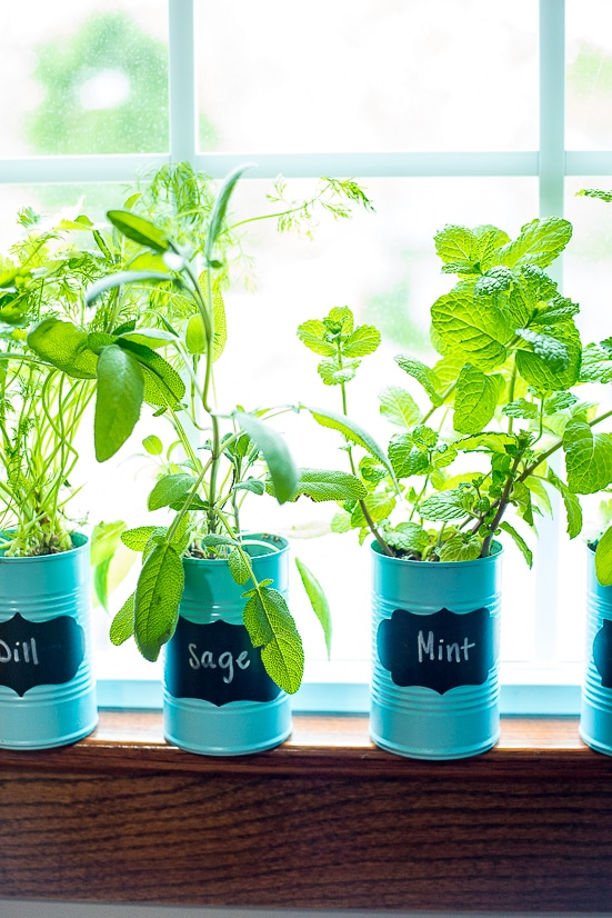 Make Your Own Indoor Plant Food