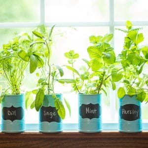 How to Make a DIY Indoor Window Sill Herb Garden -Save money, prevent food waste, and bring a little green inside with this easy and cheap DIY Indoor Window Sill Herb Garden for fresh herbs all year long!