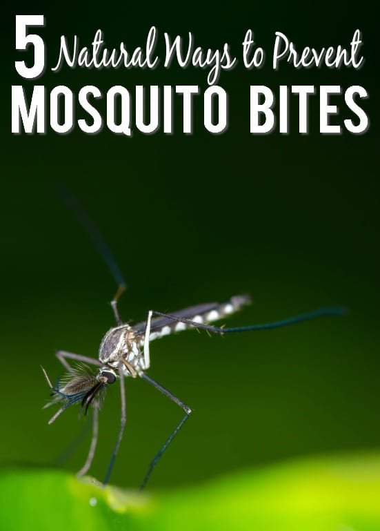 Natural Prevention for Mosquito Bites -Have more mosquito-free fun outside this Summer with these 5 simple and natural ways to prevent mosquito bites that are also totally safe for kids and pets. Parenting Tips | DIY