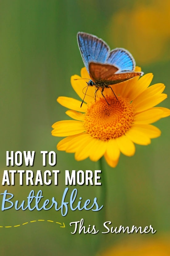 6 Ways to Attract More Butterflies to Your Yard this Summer - Butterflies are so beautiful and fun to look at. To see more this year, use these 6 easy ways to attract more butterflies to your yard this Summer! Gardening tips