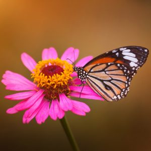 6 Ways to Attract More Butterflies to Your Yard this Summer -Butterflies are so beautiful and fun to look at. To see more this year, use these 6 easy ways to attract more butterflies to your yard this Summer! Gardening tips