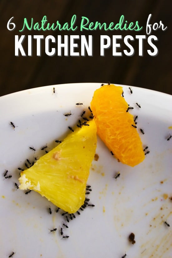 6 Natural Remedies for Kitchen Pests -If kitchen pests are invading your home and driving you nuts, try these 6 simple and natural remedies for kitchen pests to get rid them quickly! Cleaning | Kitchen Tips