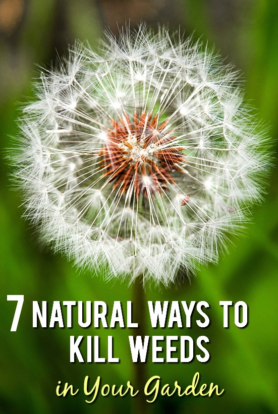 how to get rid of weeds in garden. 7 Natural Ways To Kill Weeds In Your Garden - Can Be A Huge Pain How Get Rid Of