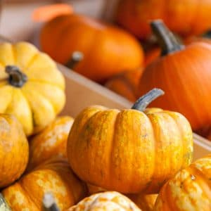 9 Uses for Mini Pumpkins -Pumpkins are everybody's favorite! They just scream Fall! Check out these 9 Uses for Mini Pumpkins to squeeze even more pumpkin into your life while the season lasts! Love decorating for Fall and mini pumpkins are so fun! Love these ideas